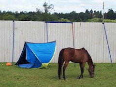 That horse needs a bigger tent
